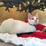 Wish List Wednesday – Geek Pets